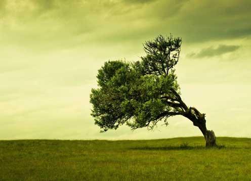 ریشه های قوی