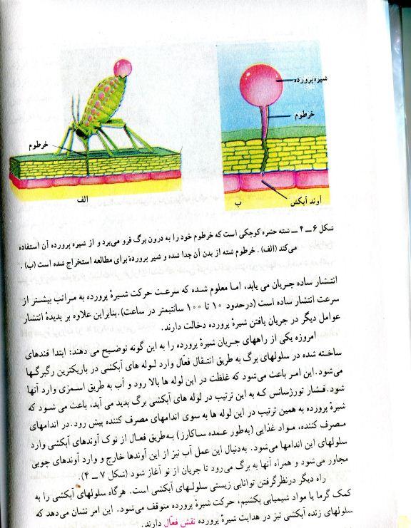 کتاب زیست شناسی گیاهی رشته علوم تجربی مربوط به سال1378-کتاب قدیمی درسی