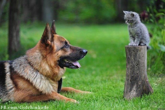یه سگ و یه گربه