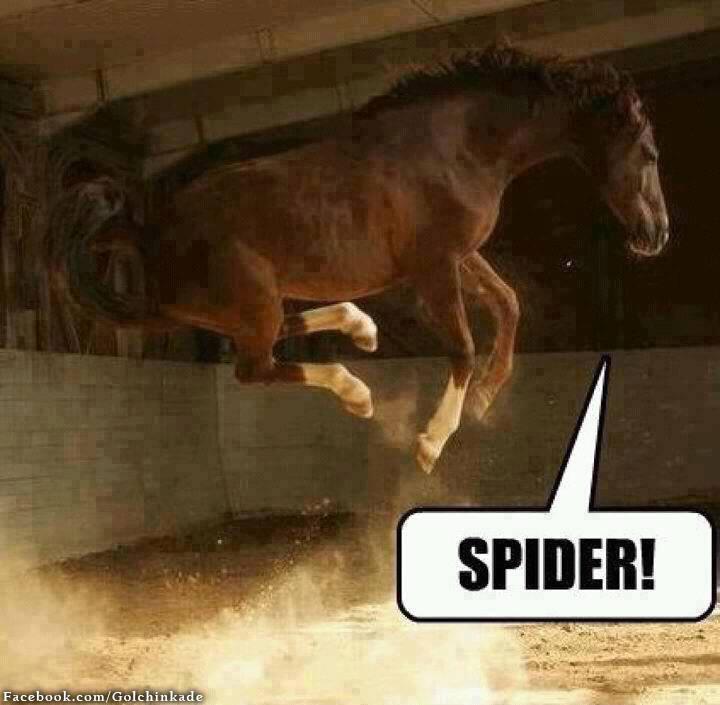 عکس خنده دار یک اسب