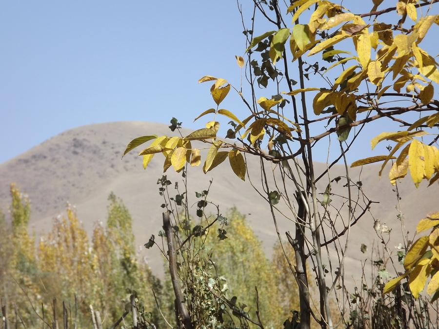 پاییز فش 2