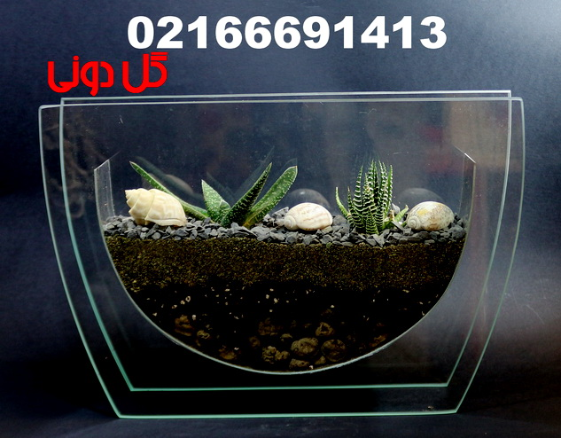 تولیدو توزیع انواع تراریوم 02166691413 - تراریوم تخت،گل دونی ...برچسبها: خرید تراریوم , فروش تراریوم , تراریوم تخت , باغ شیشه ای , کاکتوس