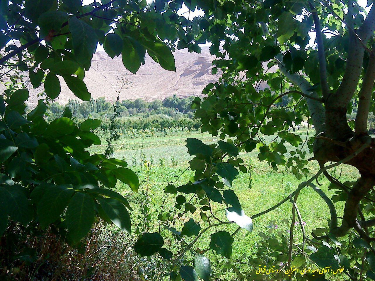 عکس های آقای امید نوری /اسفراین - روستای قزاقی