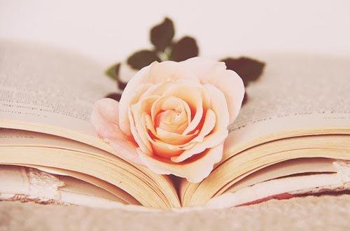 دانلود رمان کرم درونیم اندروید ، PDF و آیفون