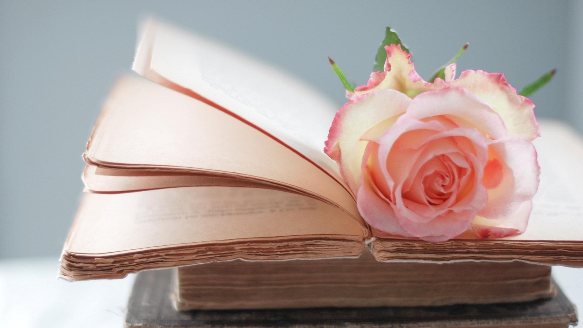 دانلود رمان دلم آغوشت را میخواهد اندروید ، PDF و آیفون