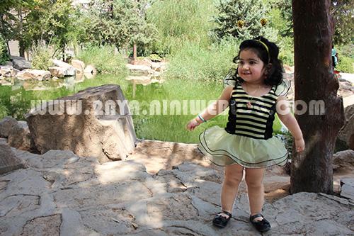 حلما زنبوری باغ ارم شیراز