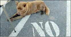 سگي که 12 سال است، يک مسير را ميرود