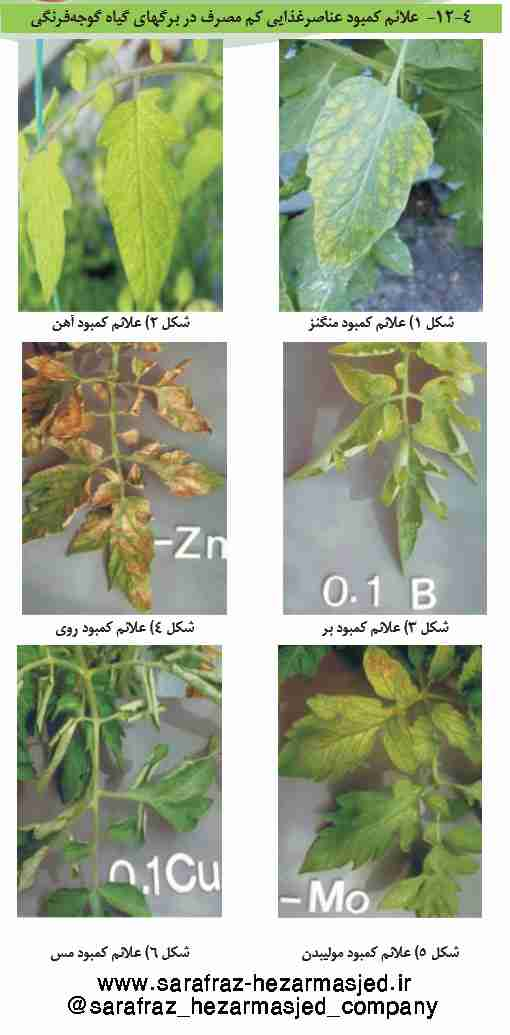 علایم کمبود عناصر غذایی کم مصرف در گیاه گوجه فرنگی