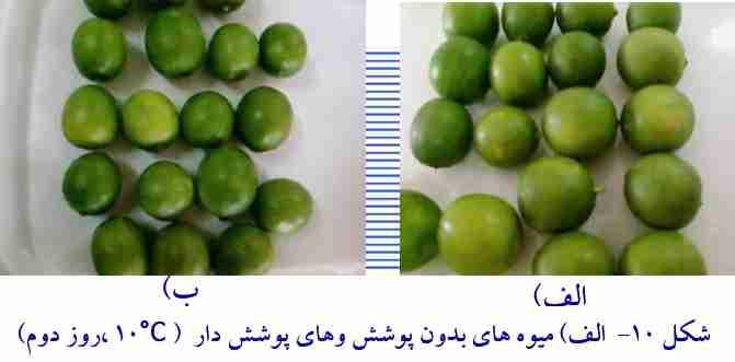 مقایسه میوه های بدون پوشش و با پوشش بعد دو روز