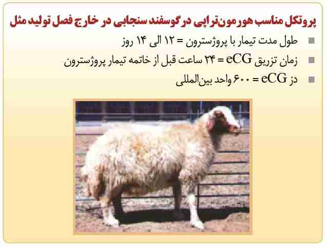 پروتوکل مناسب هورمون تراپی در گوسفند سنجابی
