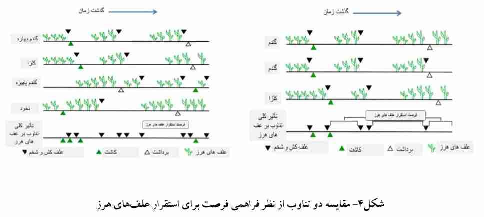 مقایسه دو تناوب از لحاظ فراهمی فرصت برای استقرار علف های هرز