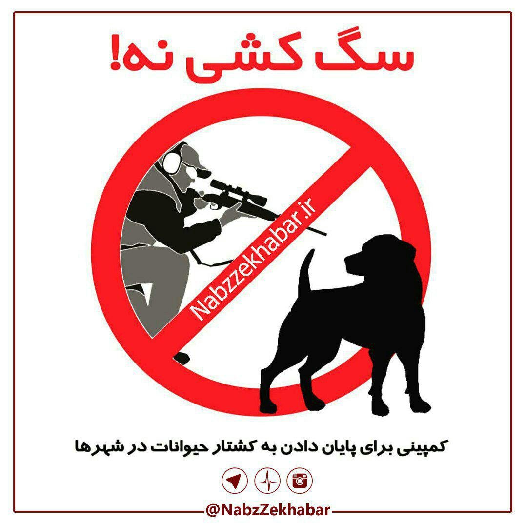 سگ کشی نه