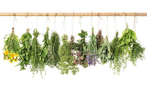 بهترین داروی گیاهی برای کاهش وزن چیست؟